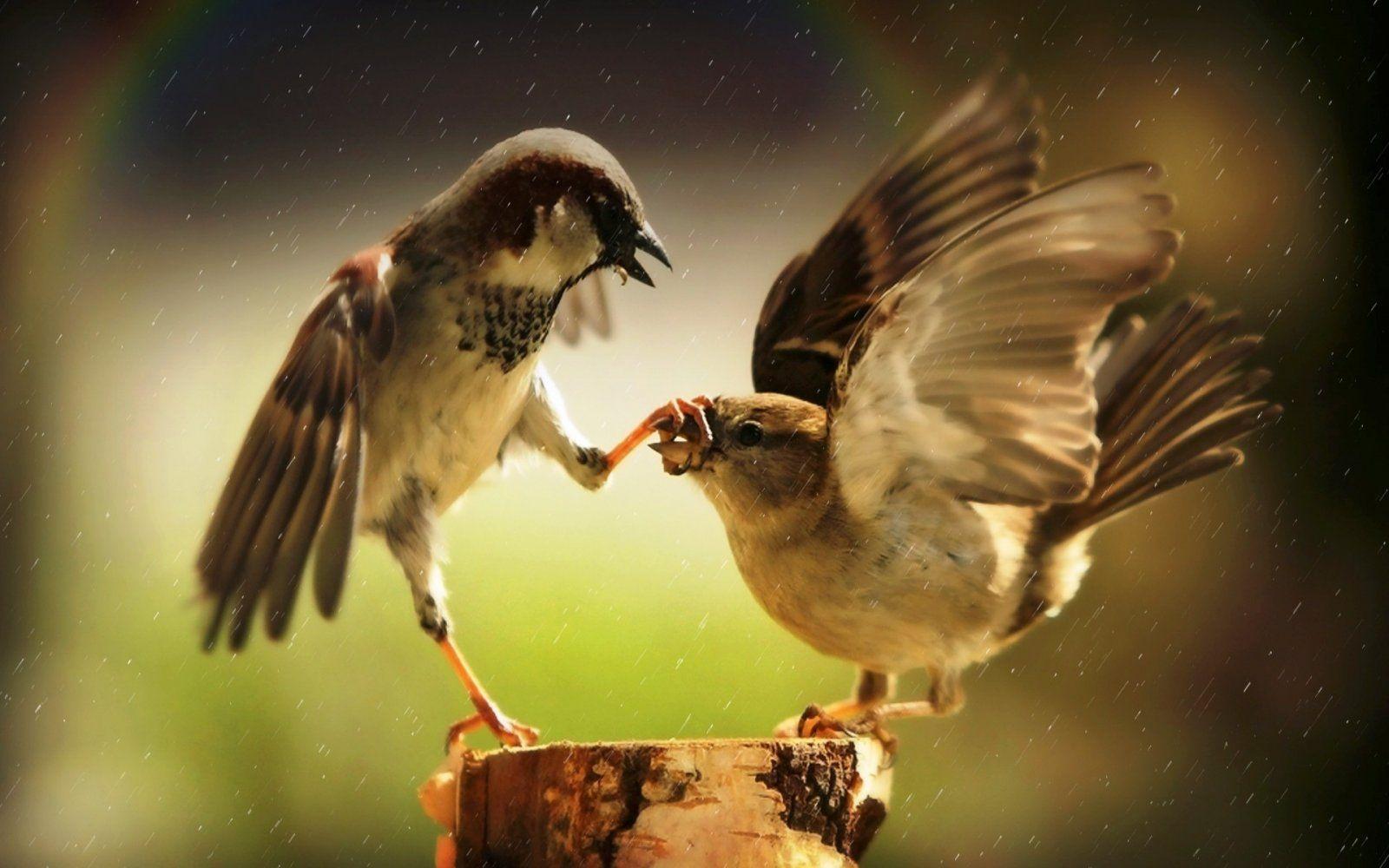 birds-animals-nature-humor-rain-wildlife-rainbows-beak-sparrow-bird-finch-wing-fauna-perching-...jpg